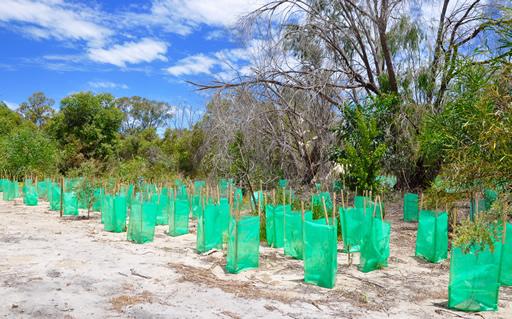 Reflorestamento Florestal